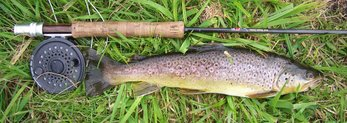 Fly rod and reel with a wild brown trout from a chalk stream.